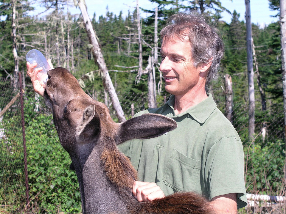 Veterinarian Andrew Peacock writes Creatures of the Rock about his adventures in Newfoundland.