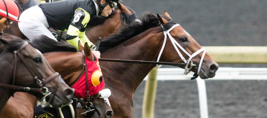 Horse jockey Emma-Jayne Wilson is one of Canada's top athletes