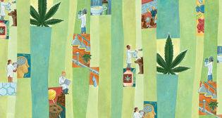 Cannabis Campus