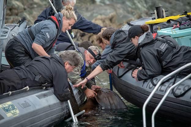 marine mammal rescue team