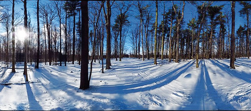 panaramic view of a forest in winter